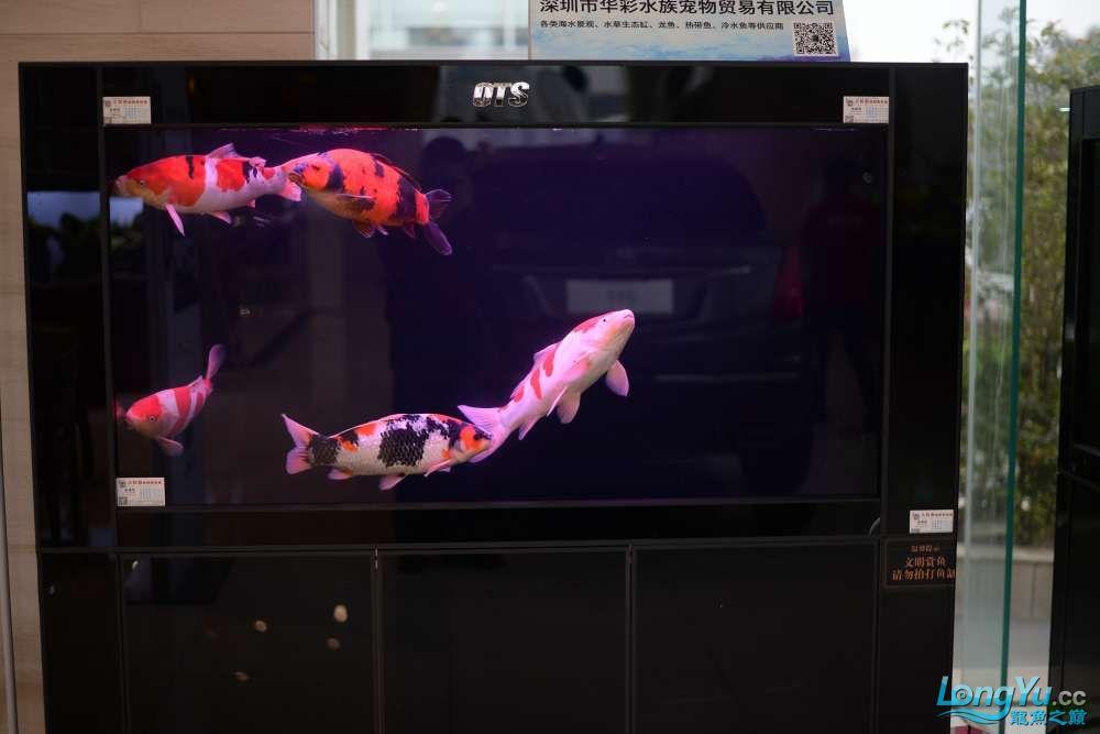 中国深圳国际水族文化节 西安龙鱼论坛 西安博特第163张