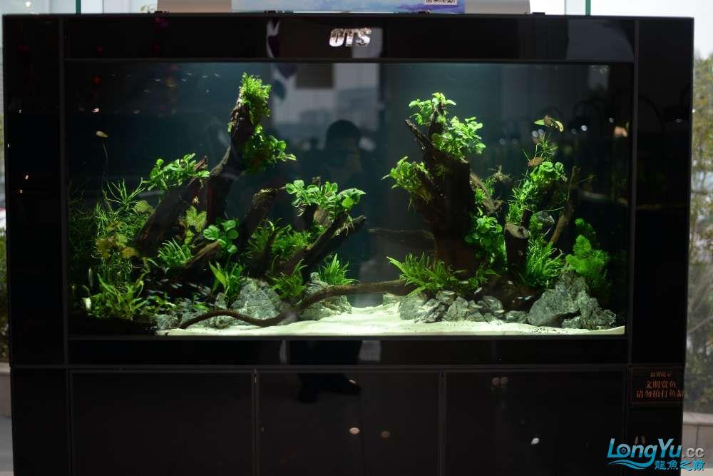 中国深圳国际水族文化节 西安龙鱼论坛 西安博特第164张