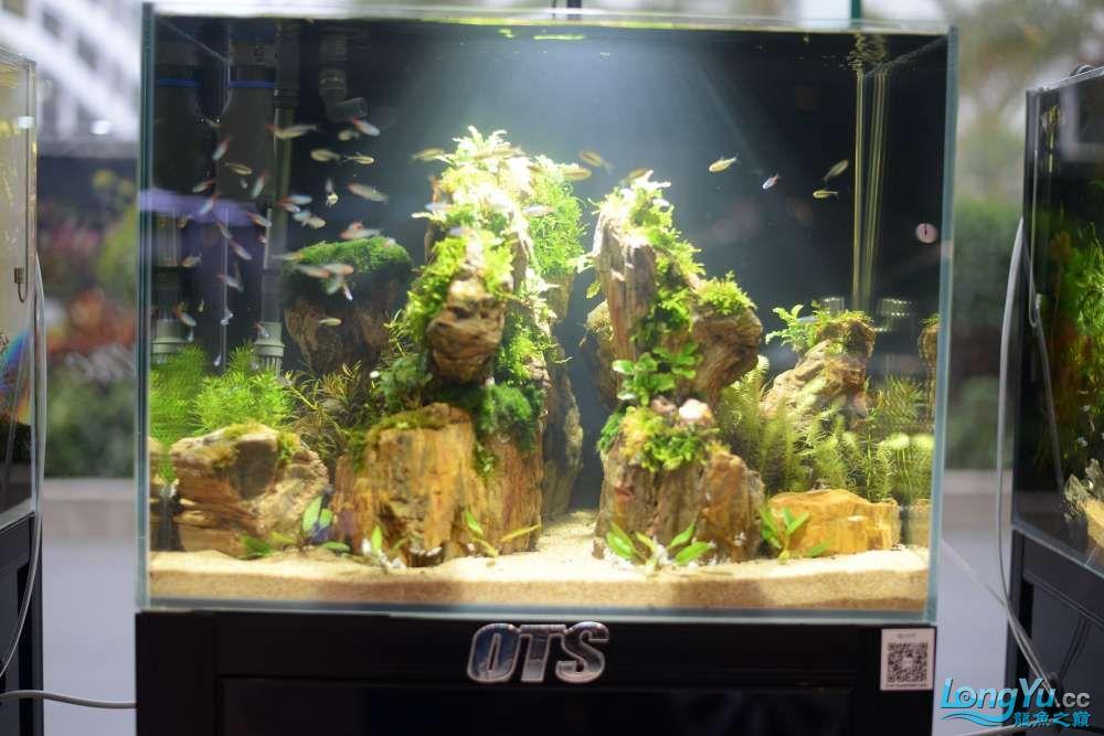 中国深圳国际水族文化节 西安龙鱼论坛 西安博特第173张