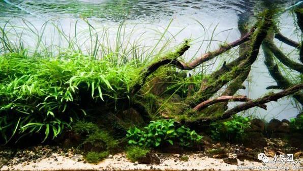 中国深圳国际水族文化节 西安龙鱼论坛 西安博特第178张