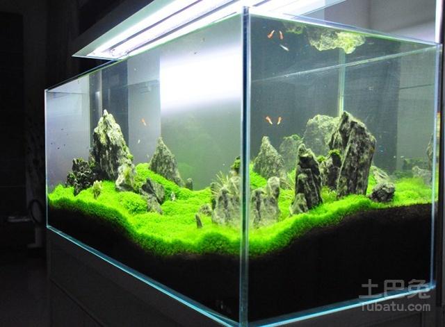深圳水族文化节知识讲座—龙鱼的起源 西安观赏鱼信息 西安博特第6张