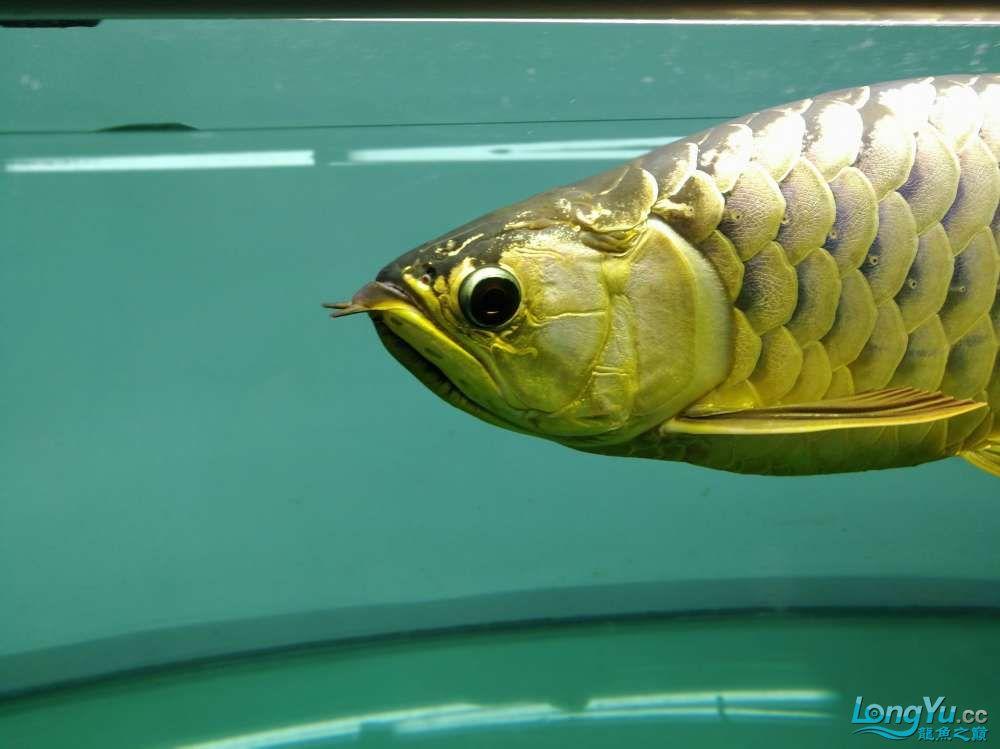 求助龙缸背景素材 西安观赏鱼信息 西安博特第1张