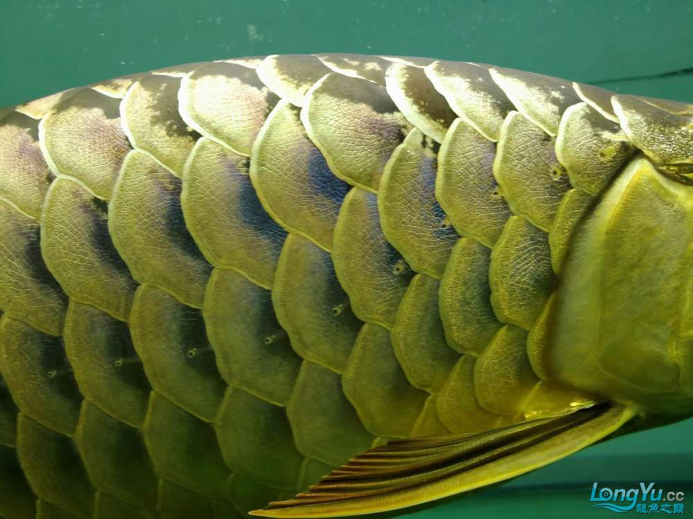 求助龙缸背景素材 西安观赏鱼信息 西安博特第2张