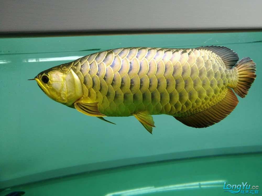 求助龙缸背景素材 西安观赏鱼信息 西安博特第3张