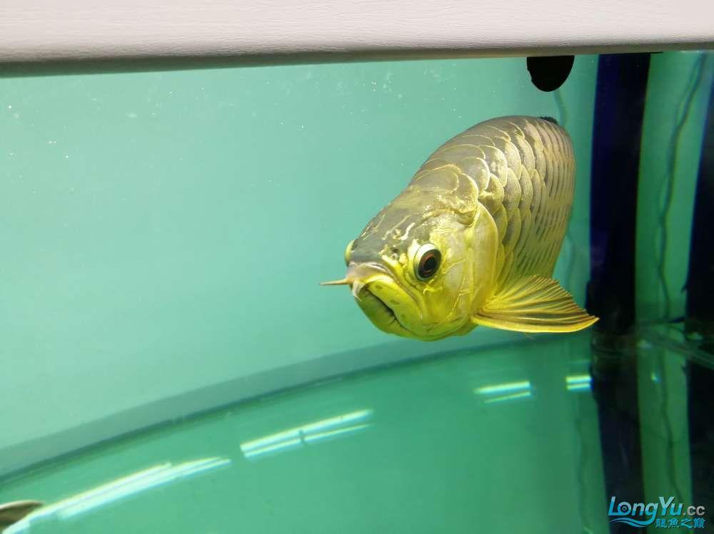 求助龙缸背景素材 西安观赏鱼信息 西安博特第4张