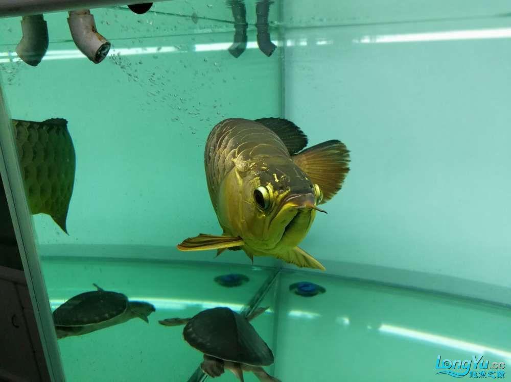 求助龙缸背景素材 西安观赏鱼信息 西安博特第6张