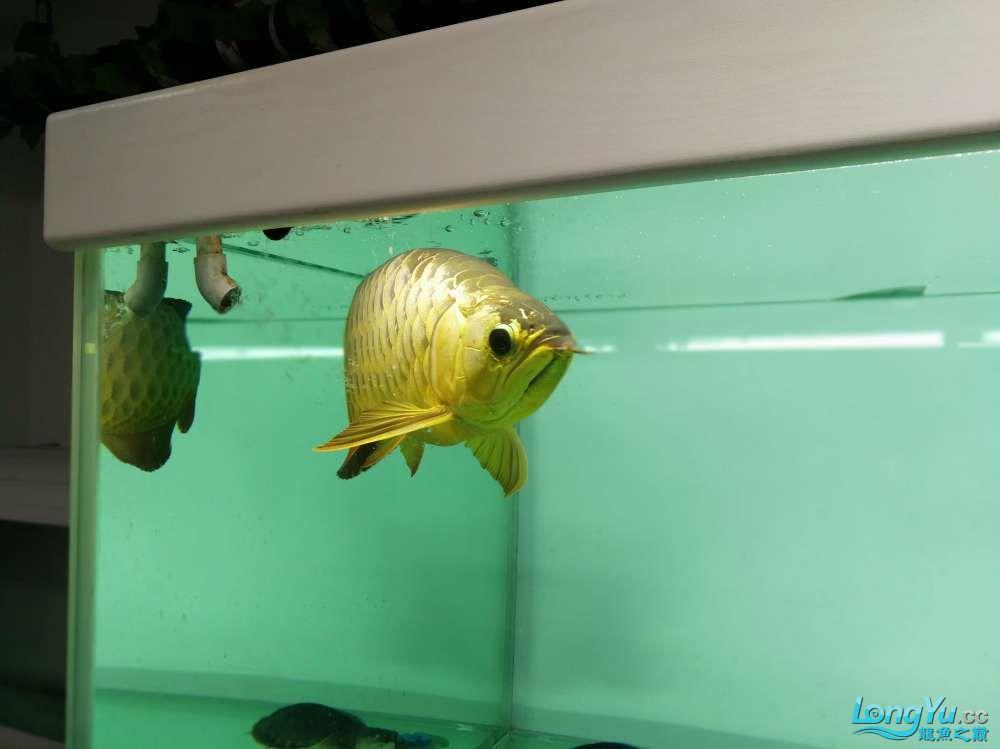 求助龙缸背景素材 西安观赏鱼信息 西安博特第8张
