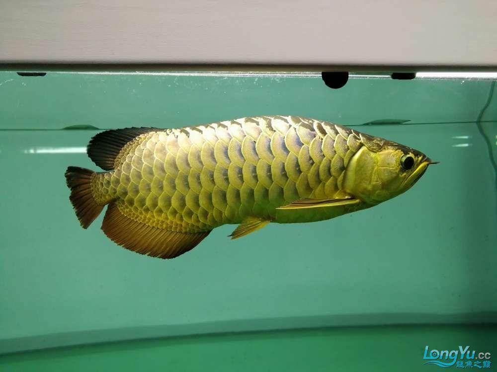 求助龙缸背景素材 西安观赏鱼信息 西安博特第9张