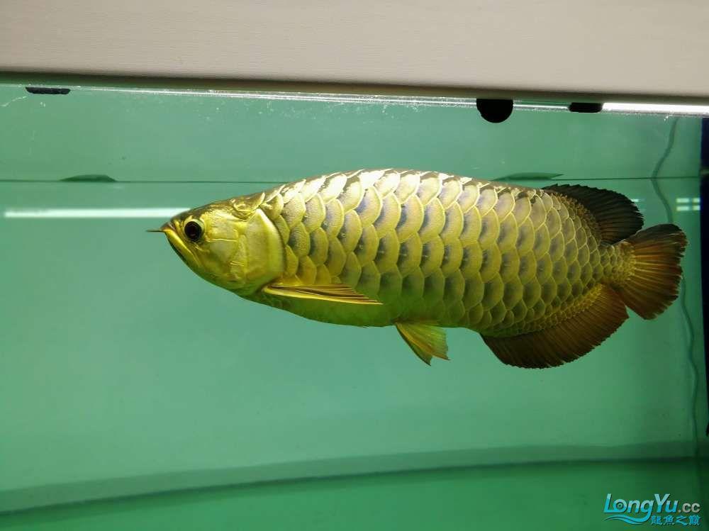 求助龙缸背景素材 西安观赏鱼信息 西安博特第10张