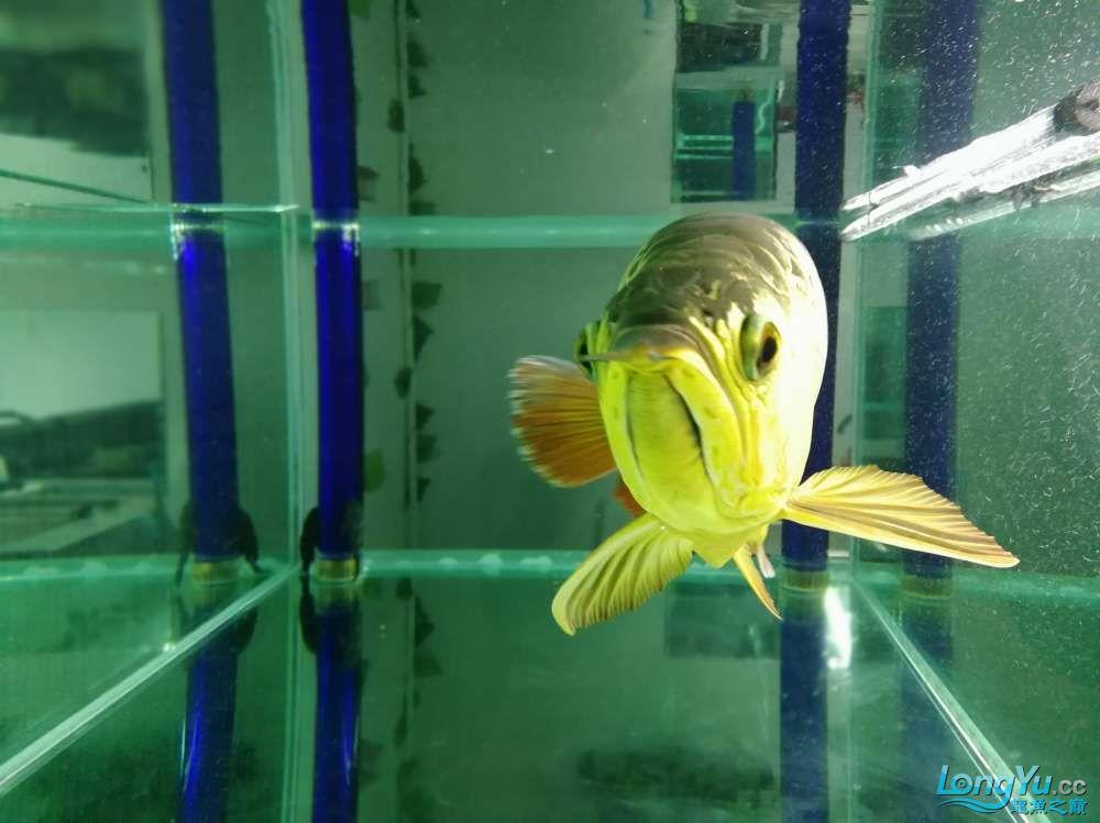 求助龙缸背景素材 西安观赏鱼信息 西安博特第11张