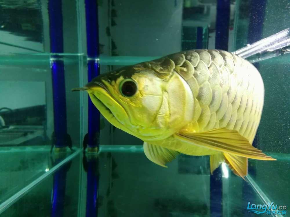 求助龙缸背景素材 西安观赏鱼信息 西安博特第12张
