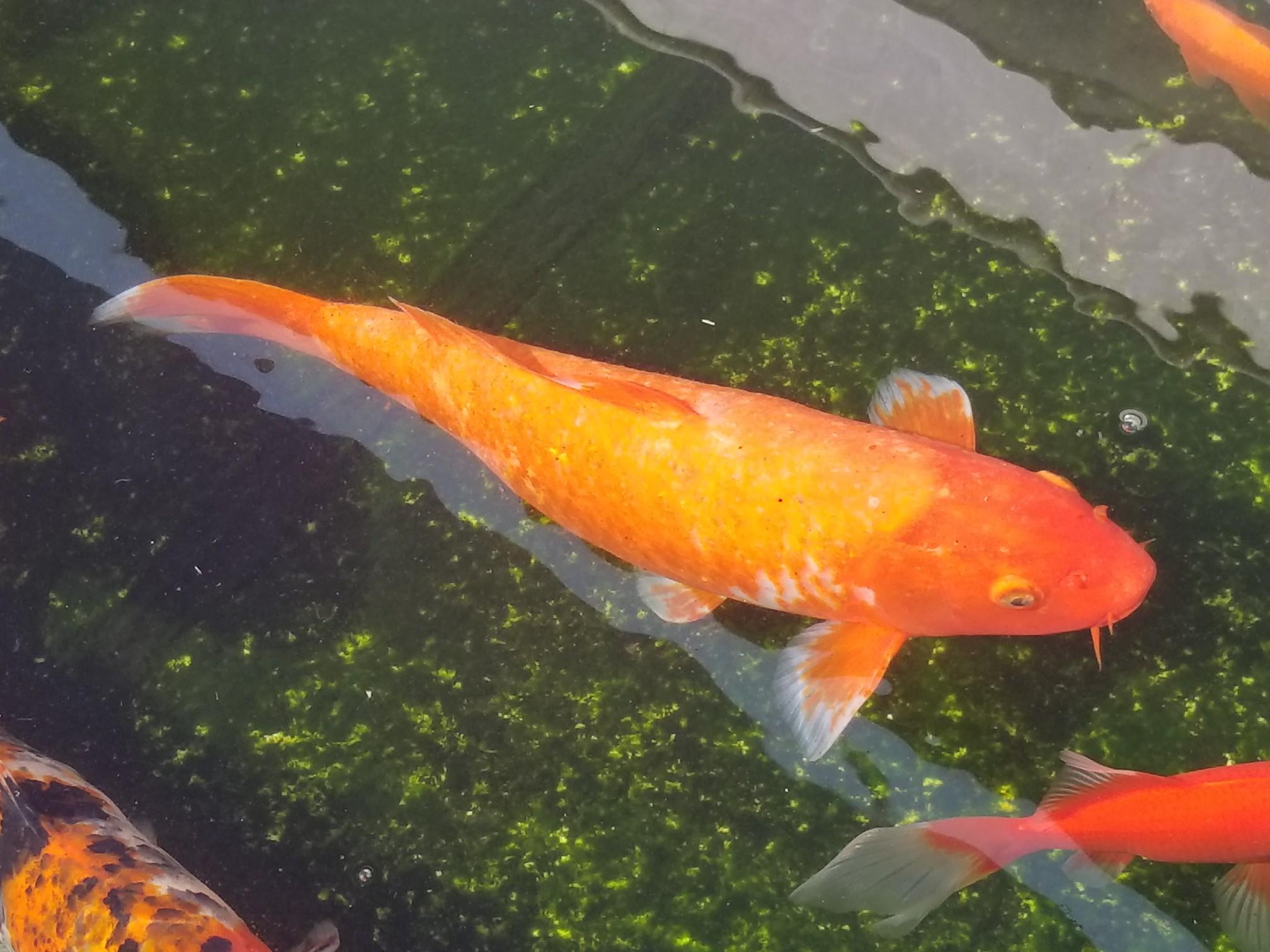 【西安海水鱼批发】咋整一直好不了 西安观赏鱼信息 西安博特第1张
