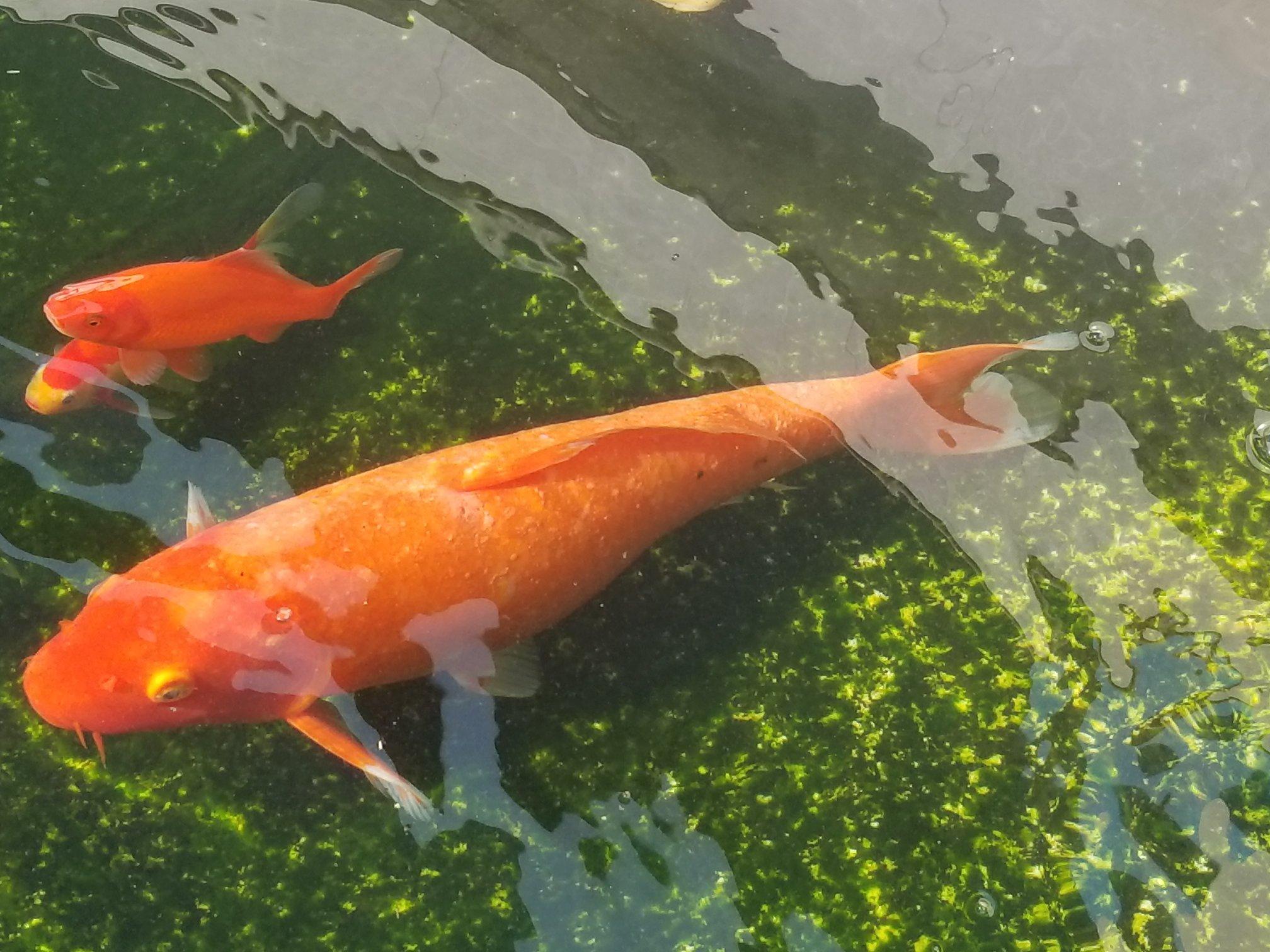 【西安海水鱼批发】咋整一直好不了 西安观赏鱼信息 西安博特第3张