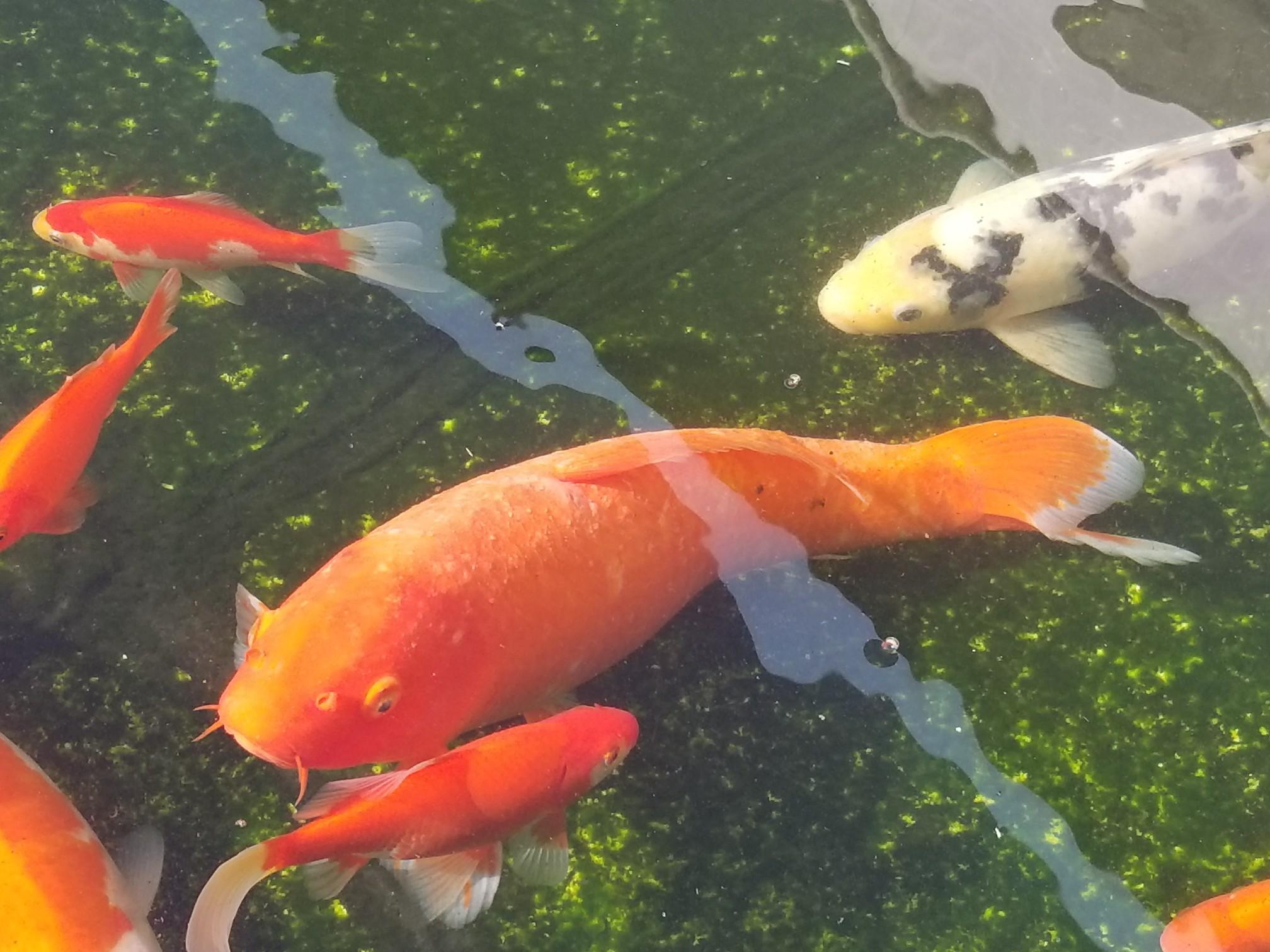 【西安海水鱼批发】咋整一直好不了 西安观赏鱼信息 西安博特第2张