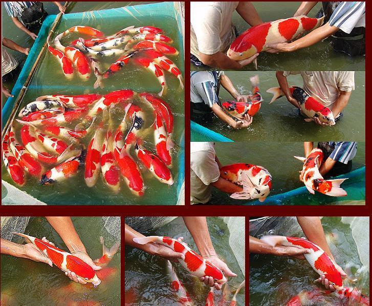 【西安海水鱼批发】咋整一直好不了 西安观赏鱼信息 西安博特第4张