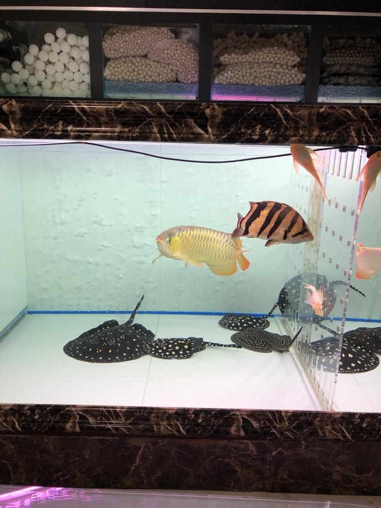 准备喂食 西安观赏鱼信息 西安博特第1张