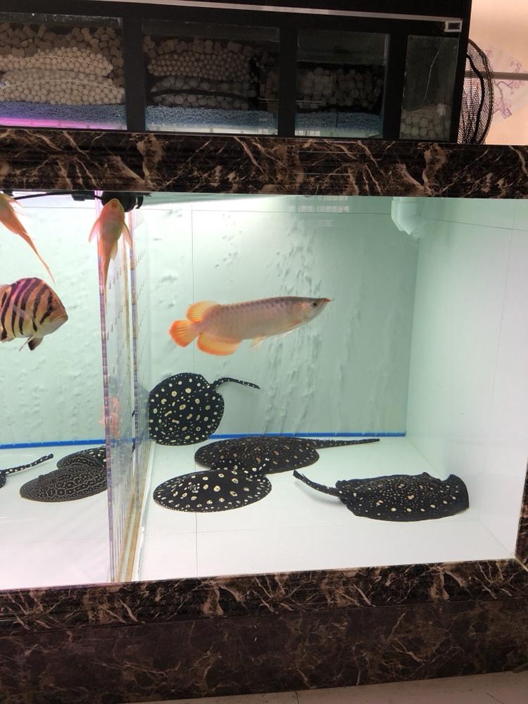 准备喂食 西安观赏鱼信息 西安博特第3张