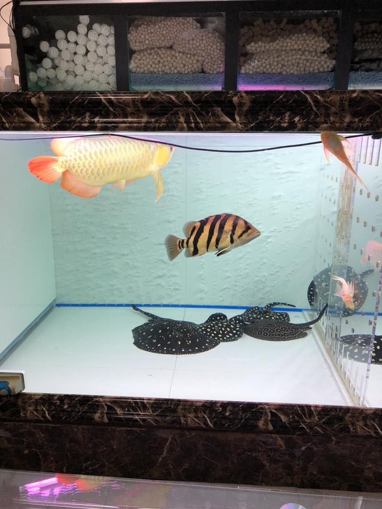准备喂食 西安观赏鱼信息 西安博特第2张