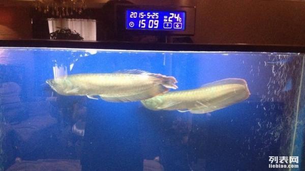 三重溢流出水管可以锯短吗 西安龙鱼论坛 西安博特第3张