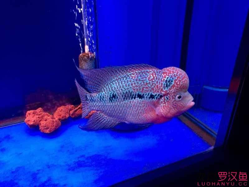 好像该减肥了 西安观赏鱼信息 西安博特第4张
