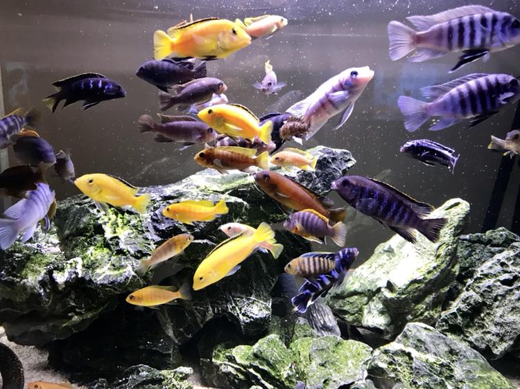 活泼欢快的岩栖 西安观赏鱼信息 西安博特第1张