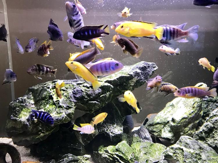 活泼欢快的岩栖 西安观赏鱼信息 西安博特第2张