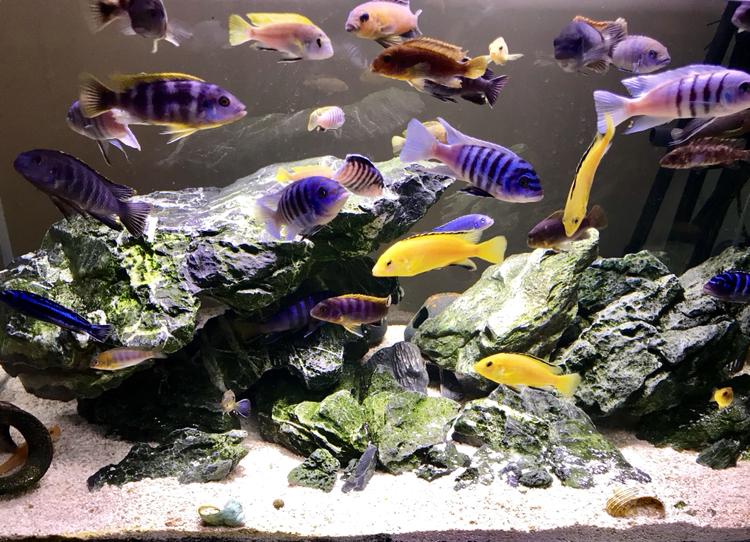 活泼欢快的岩栖 西安观赏鱼信息 西安博特第4张