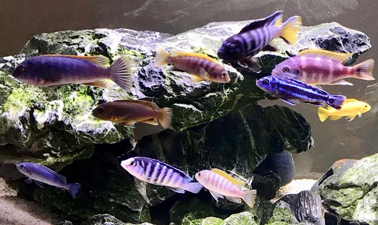 活泼欢快的岩栖 西安观赏鱼信息 西安博特第6张