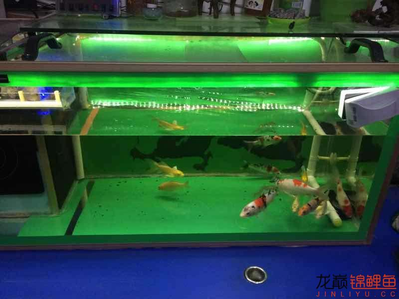 业余爱好土炮 西安观赏鱼信息 西安博特第1张