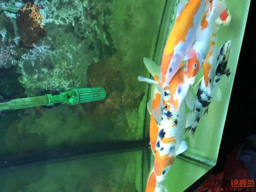 【西安水族箱批售】今天休息分享一下 西安龙鱼论坛 西安博特第3张