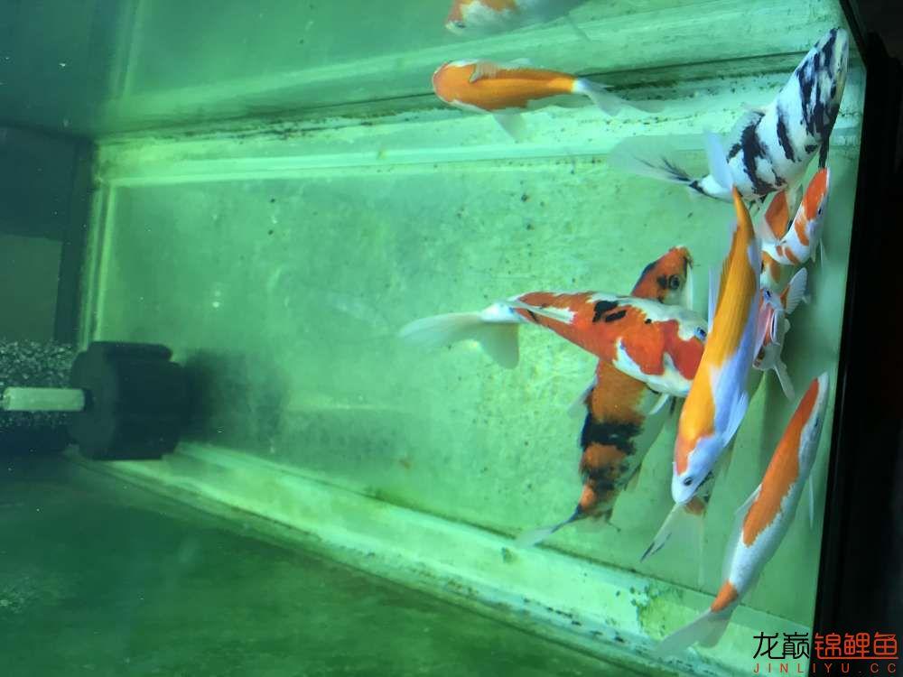 【西安水族箱批售】今天休息分享一下 西安龙鱼论坛 西安博特第4张