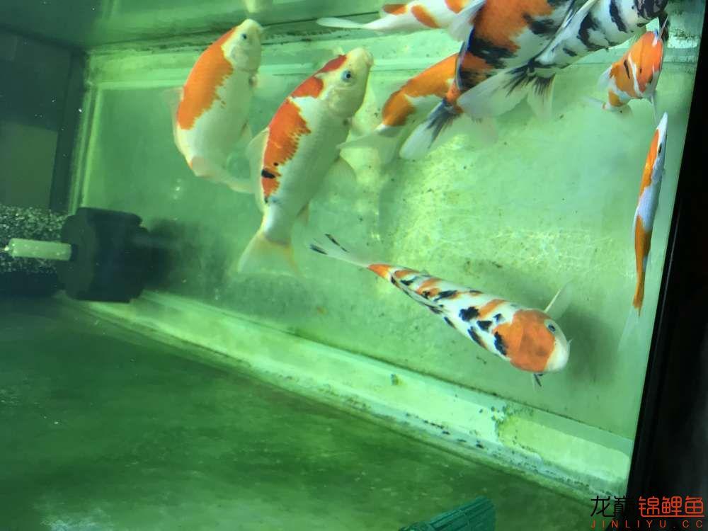 【西安水族箱批售】今天休息分享一下 西安龙鱼论坛 西安博特第5张