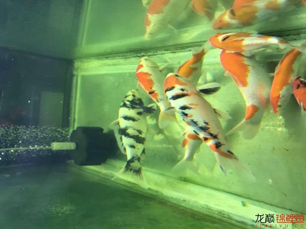 【西安水族箱批售】今天休息分享一下 西安龙鱼论坛 西安博特第6张