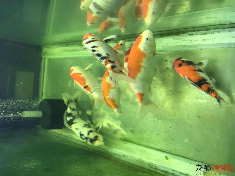 【西安水族箱批售】今天休息分享一下 西安龙鱼论坛 西安博特第7张