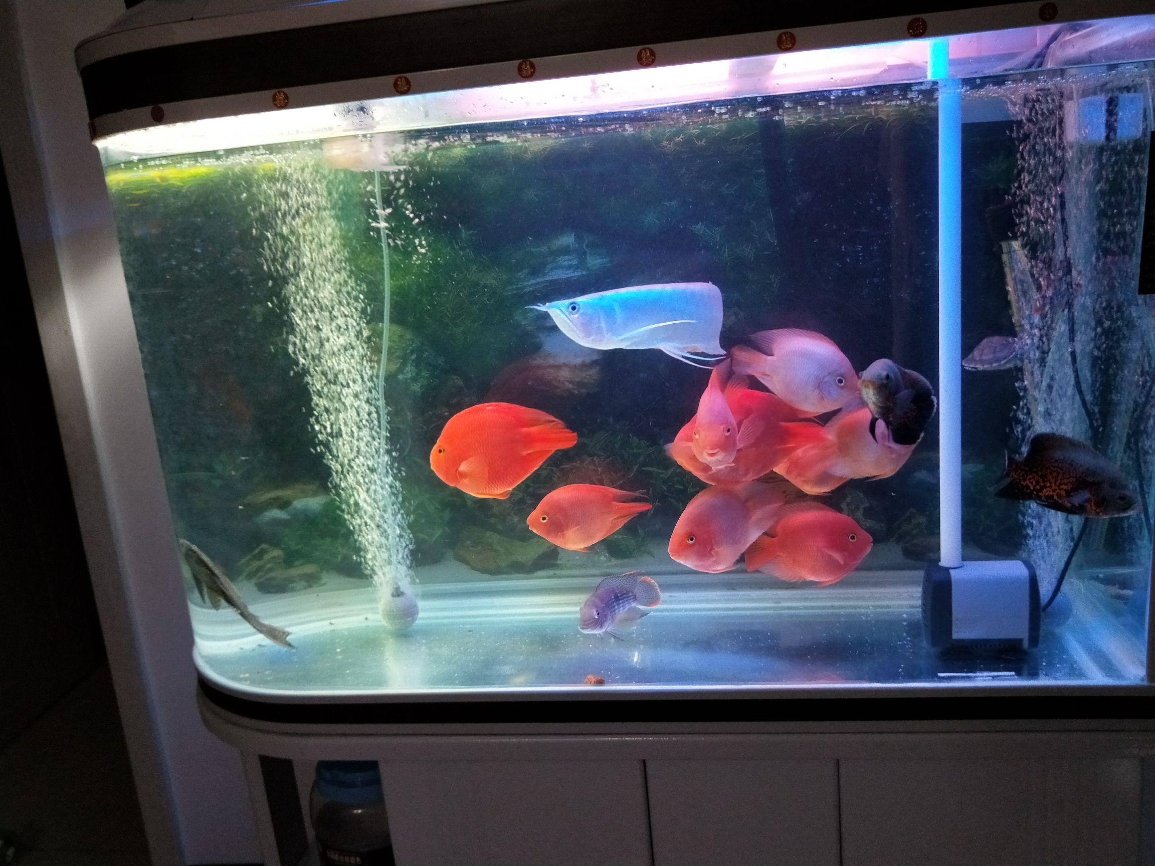 【西安红龙鱼粮】鱼鱼 今天都怎么爱动 为什么呢 西安观赏鱼信息 西安博特第1张