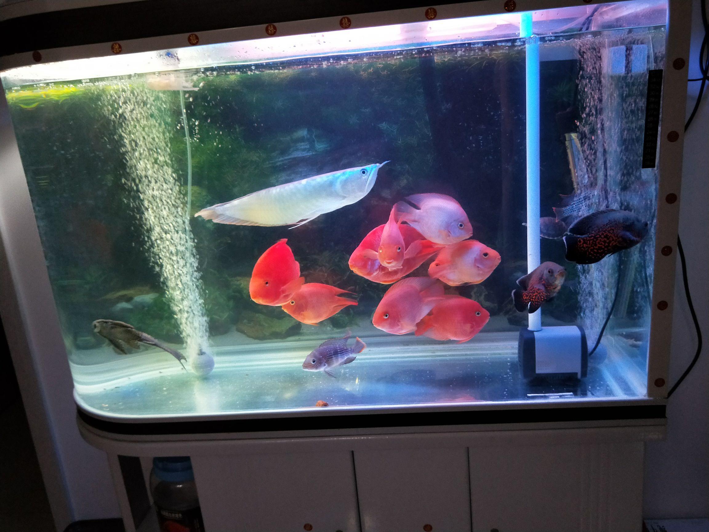 【西安红龙鱼粮】鱼鱼 今天都怎么爱动 为什么呢 西安观赏鱼信息 西安博特第2张