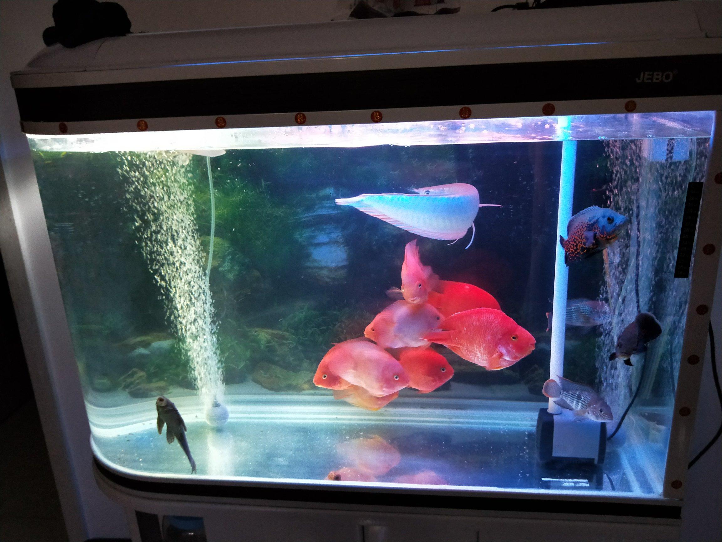 【西安红龙鱼粮】鱼鱼 今天都怎么爱动 为什么呢 西安观赏鱼信息 西安博特第3张
