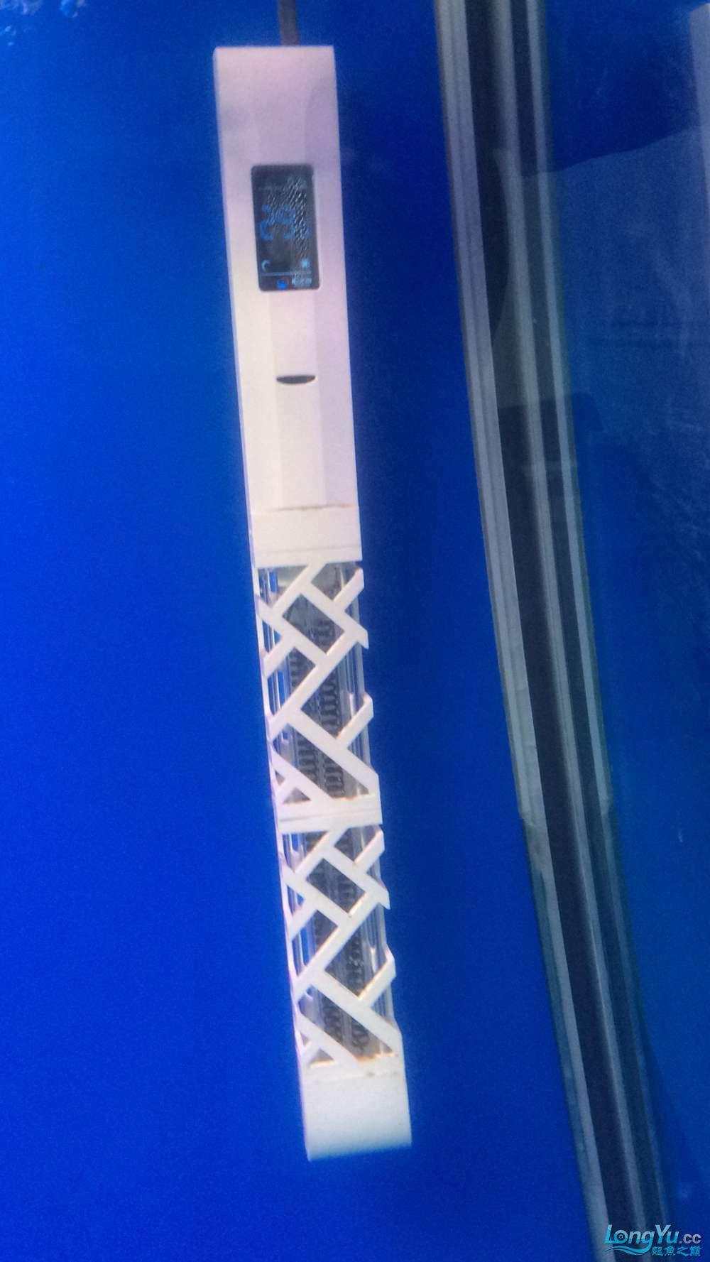 新年愿望多得一个徽章就行啦 西安观赏鱼信息 西安博特第3张