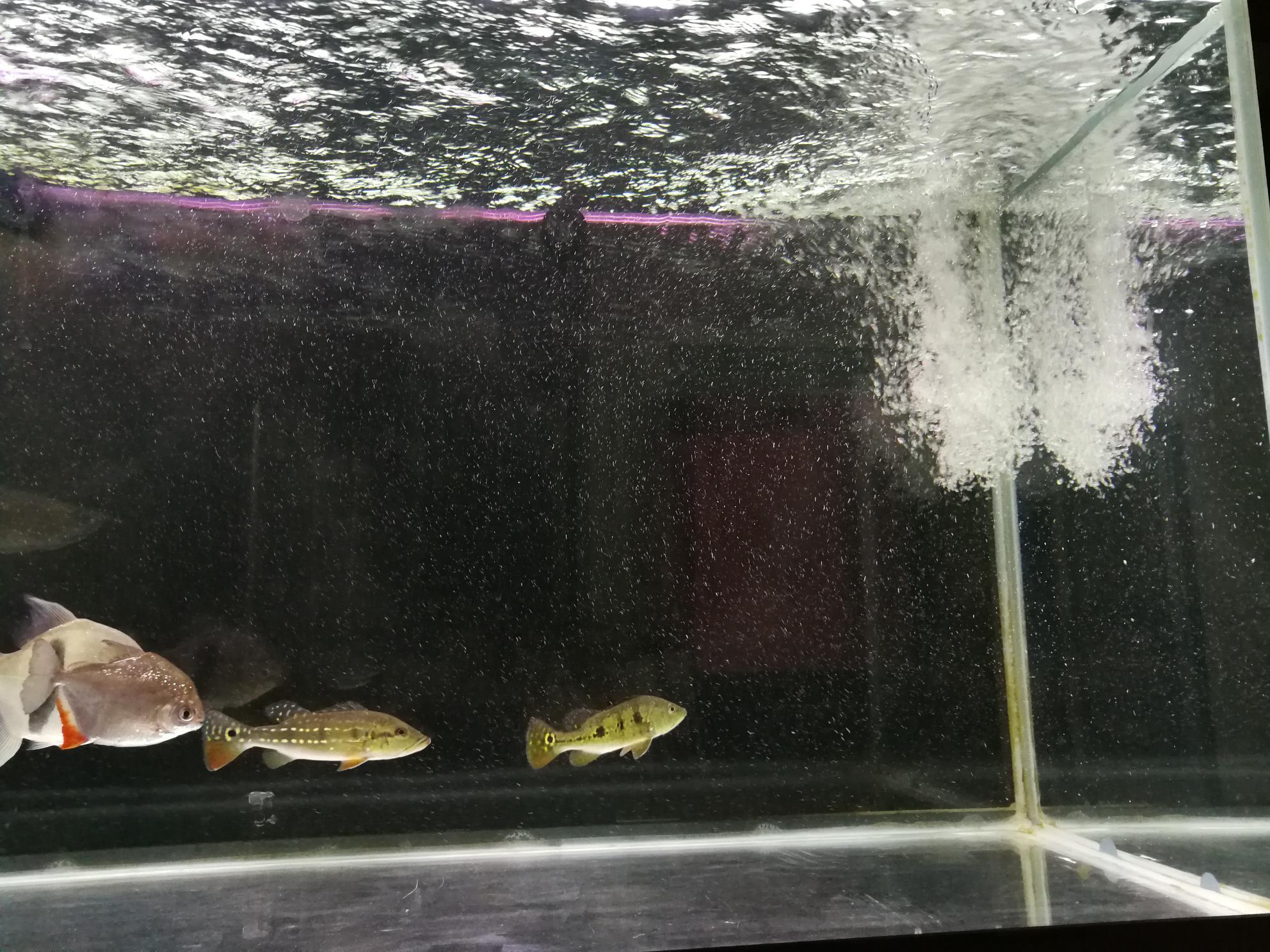 鱼缸里的水有水泡 西安观赏鱼信息 西安博特第1张
