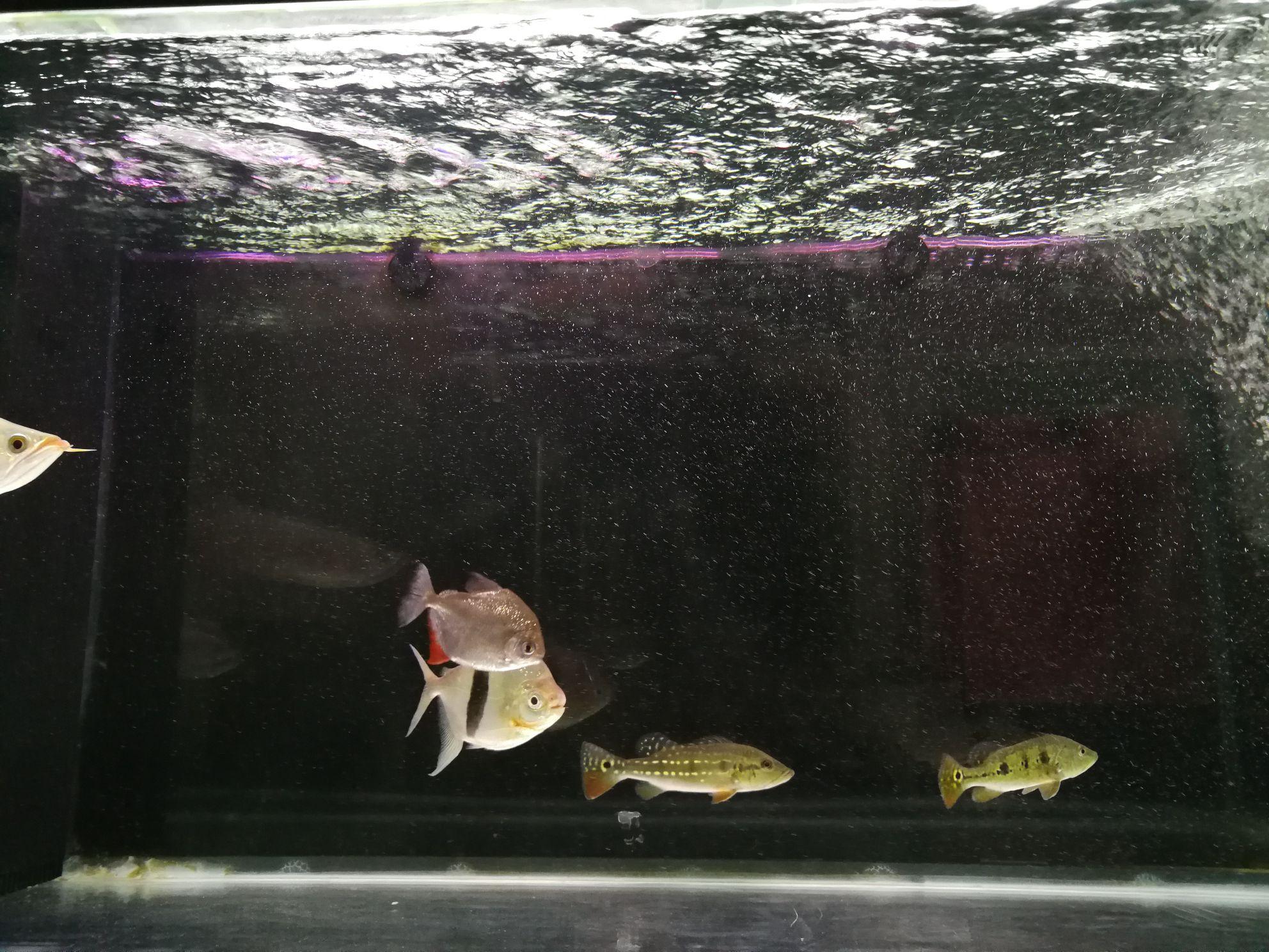 鱼缸里的水有水泡 西安观赏鱼信息 西安博特第2张