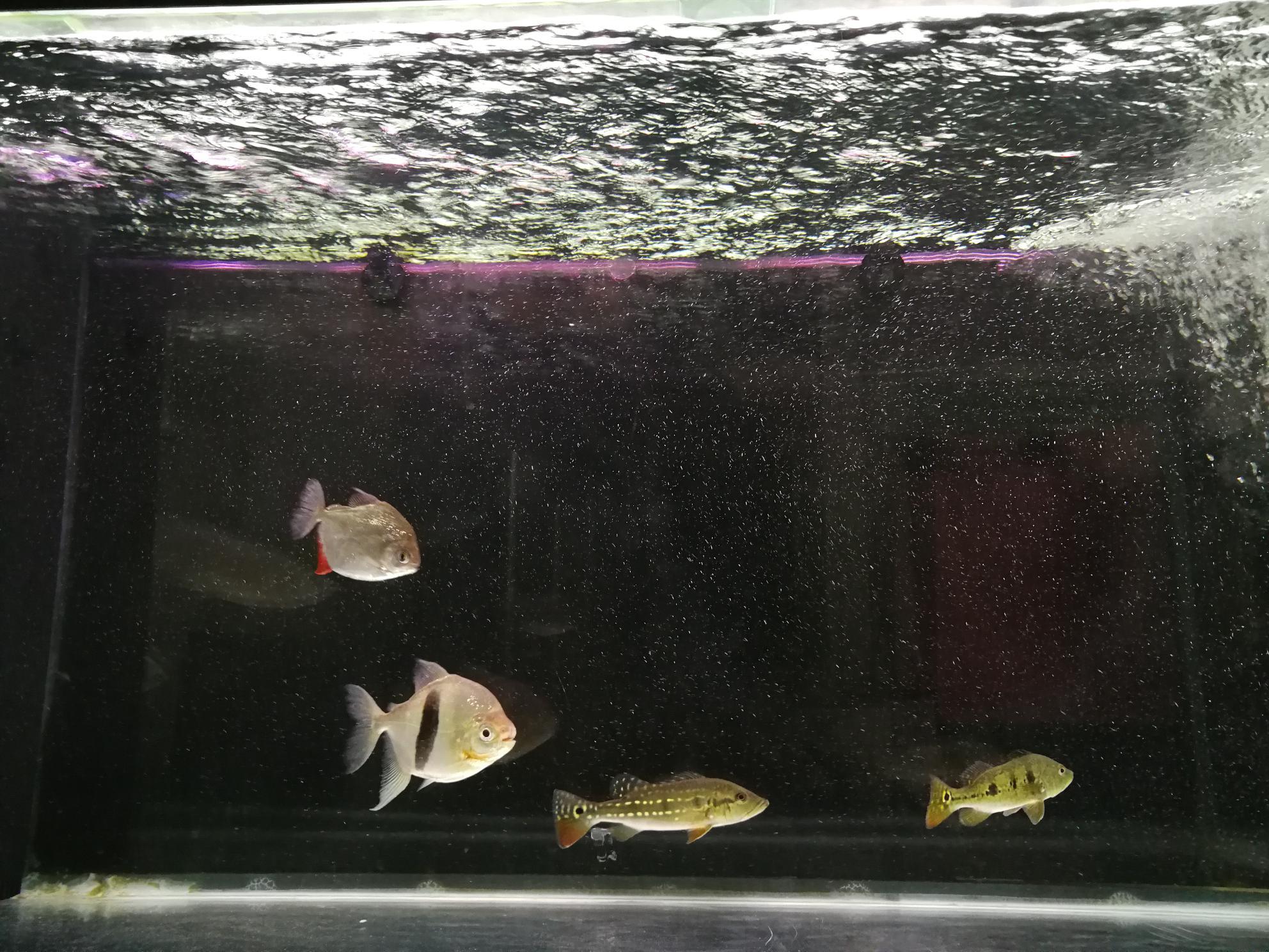 鱼缸里的水有水泡 西安观赏鱼信息 西安博特第3张