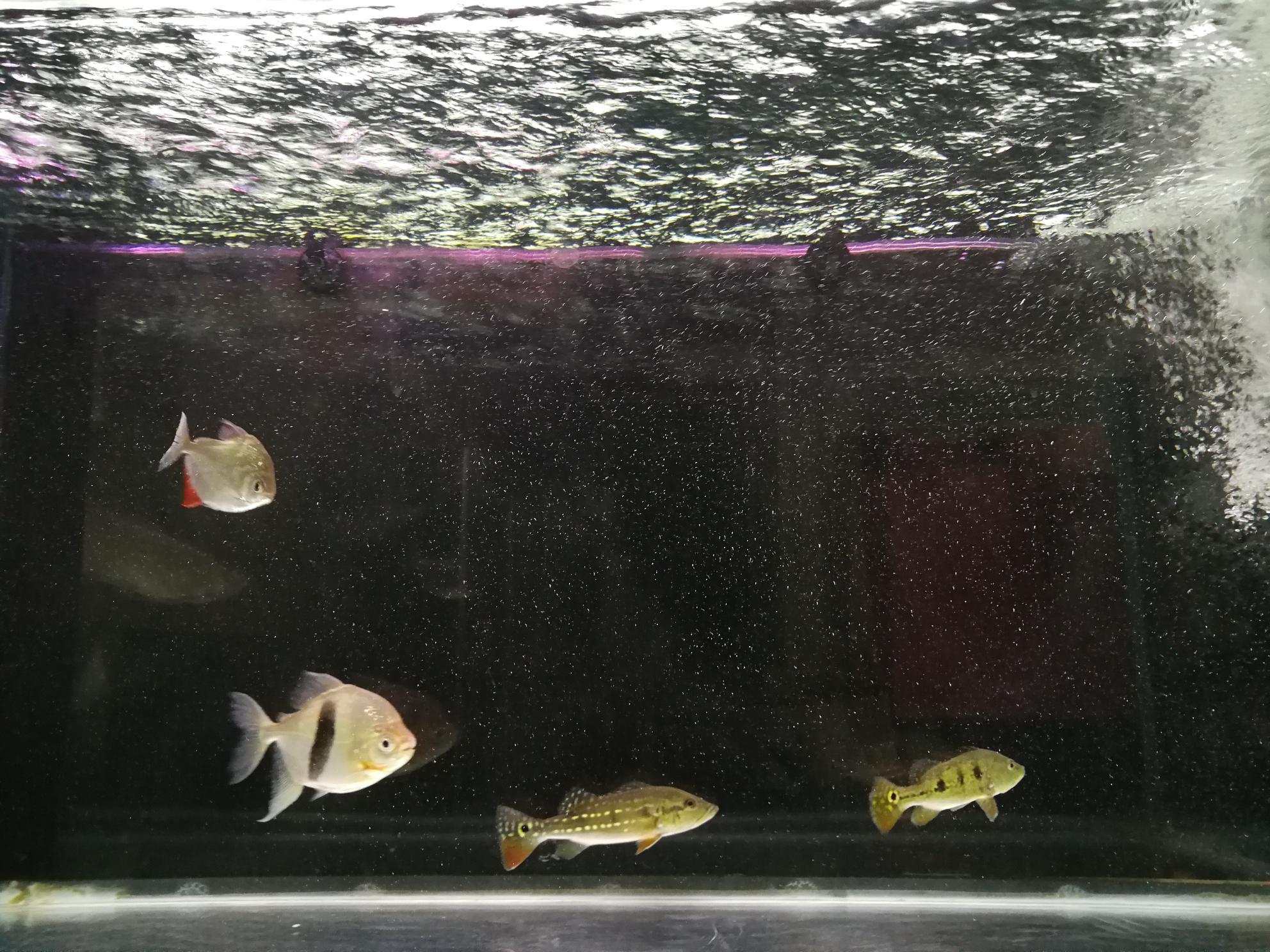 鱼缸里的水有水泡 西安观赏鱼信息 西安博特第4张