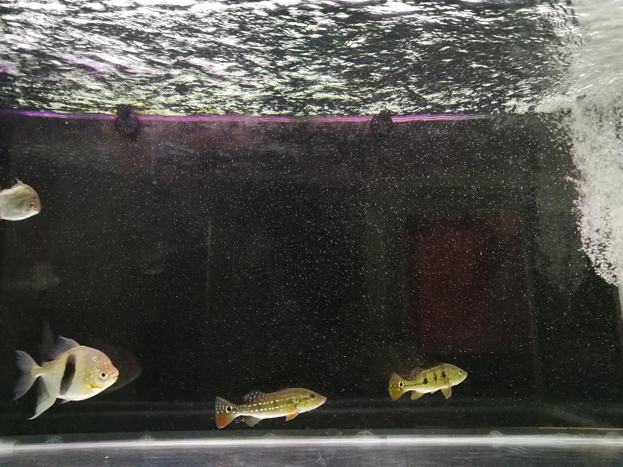 鱼缸里的水有水泡 西安观赏鱼信息 西安博特第5张