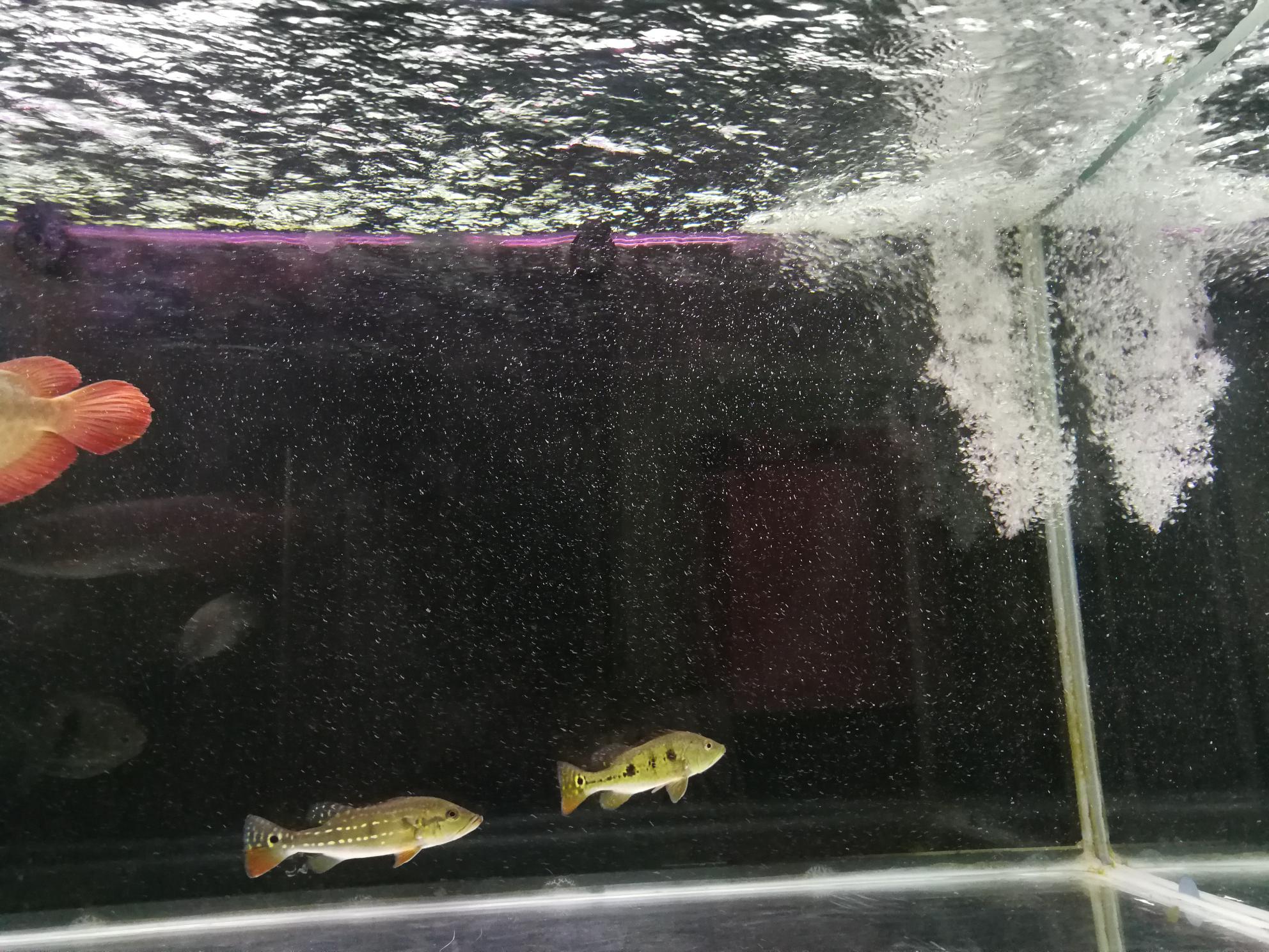 鱼缸里的水有水泡 西安观赏鱼信息 西安博特第7张