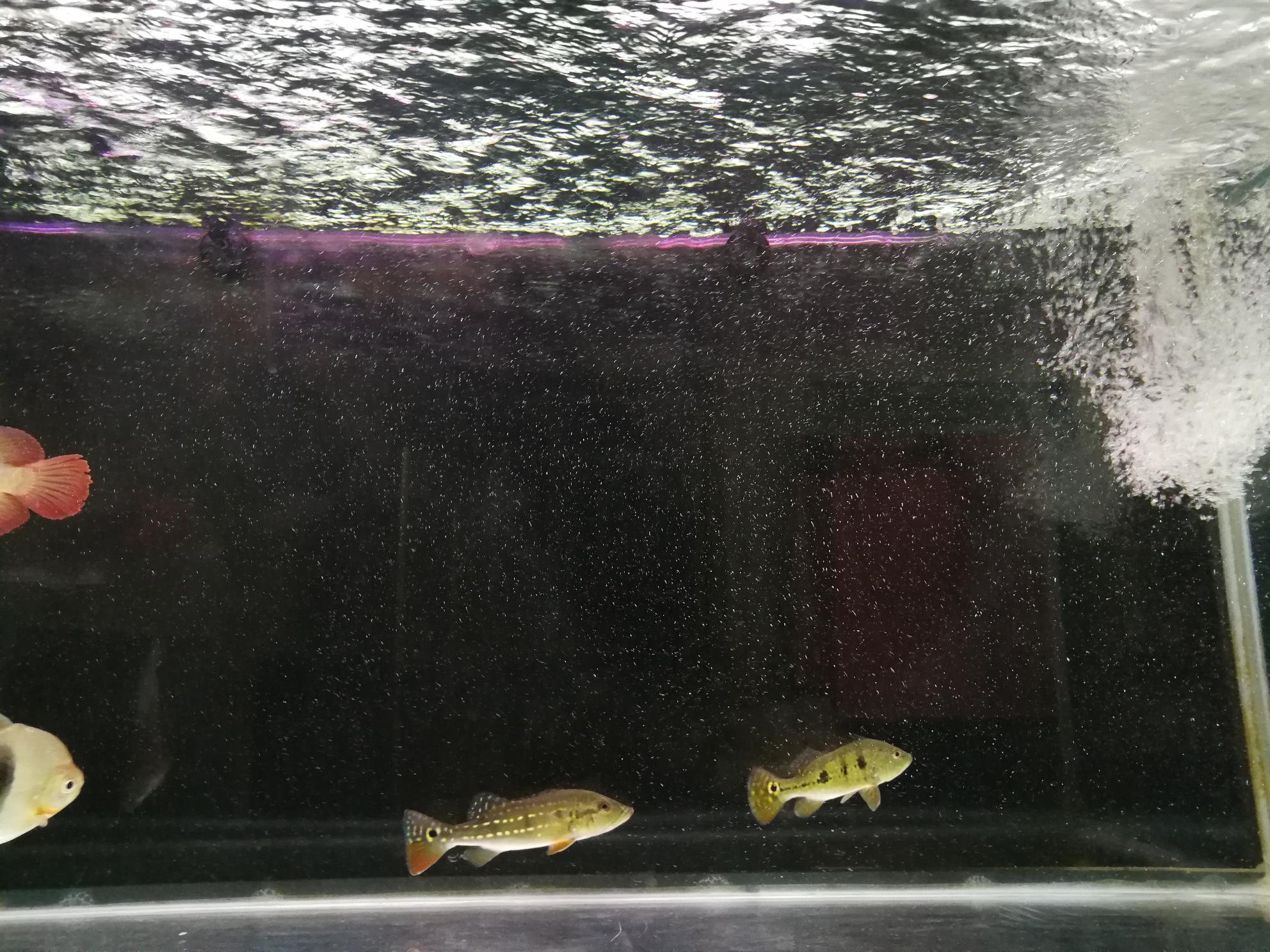 鱼缸里的水有水泡 西安观赏鱼信息 西安博特第6张