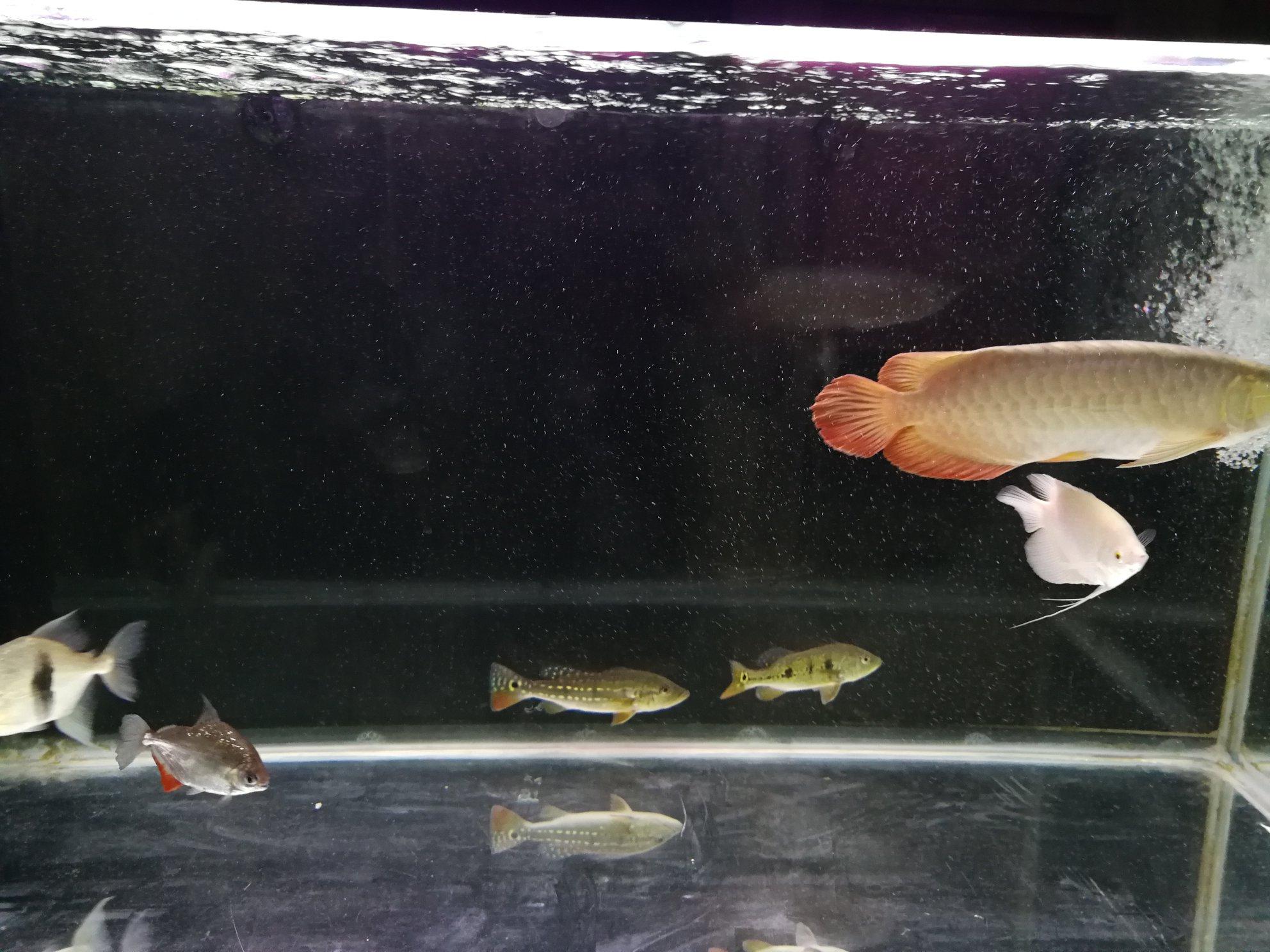 鱼缸里的水有水泡 西安观赏鱼信息 西安博特第8张