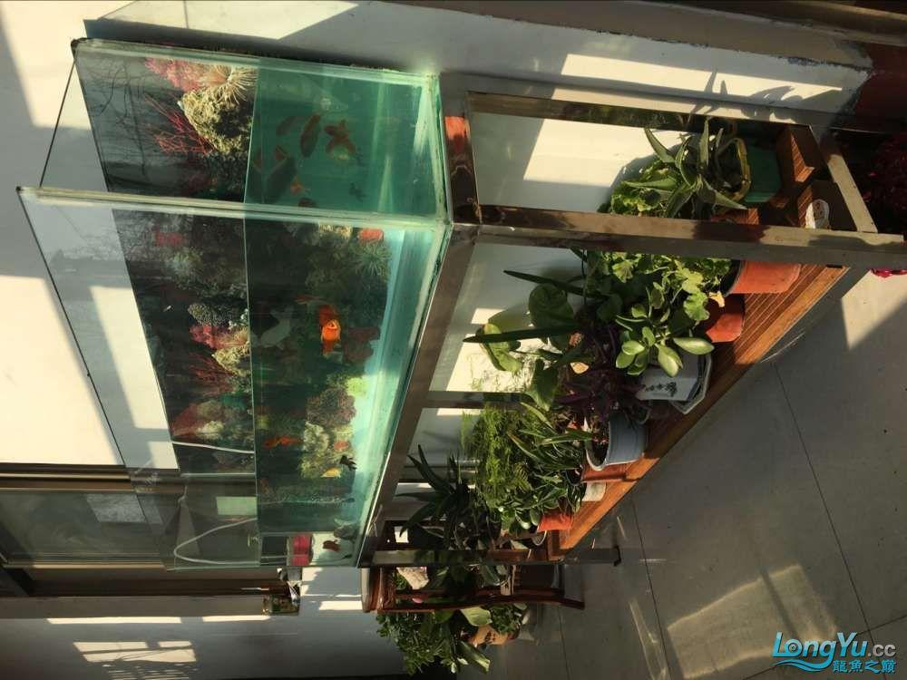 关于鱼缸水容量及水泵问题 西安观赏鱼信息 西安博特第4张