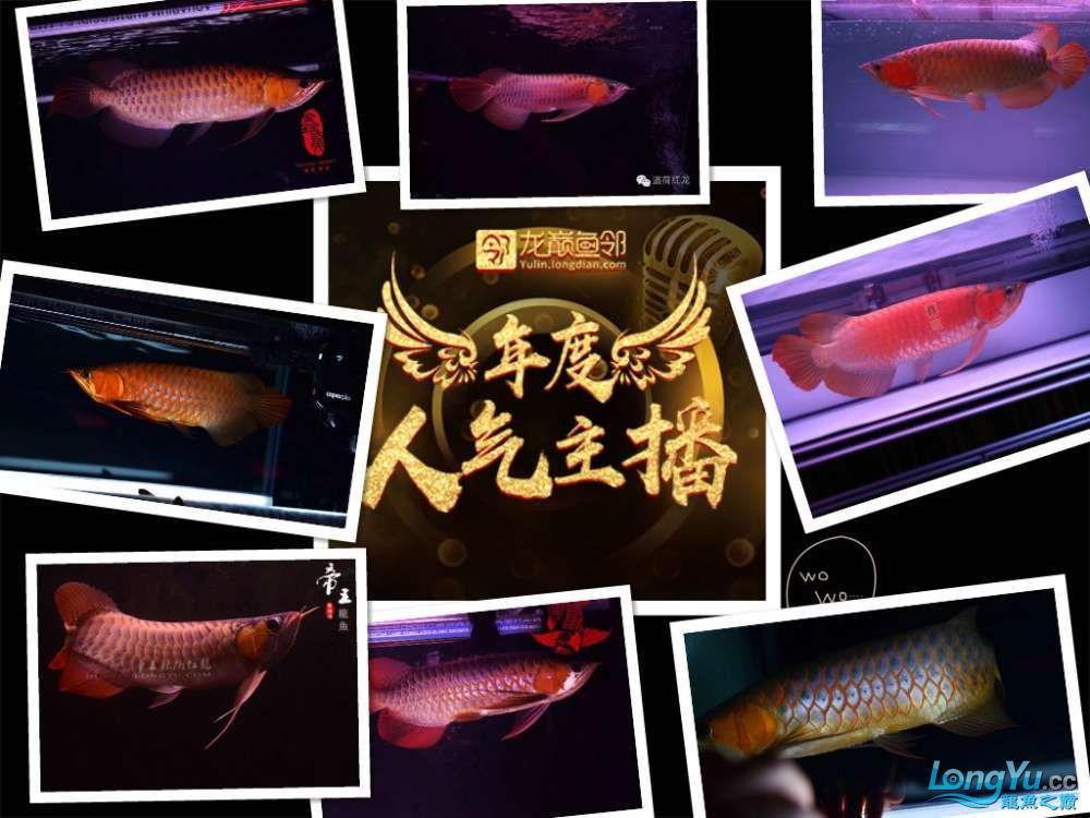 年度人气主播火热开战 西安观赏鱼信息 西安博特第2张