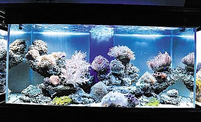 高锰酸钾开缸准备 西安观赏鱼信息 西安博特第10张