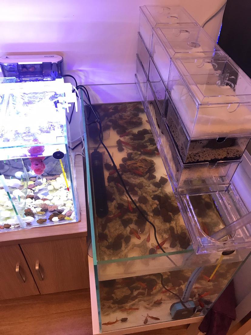 【西安可丽爱水族馆】大家都说我的鱼缸小我又弄了一个 西安观赏鱼信息 西安博特第1张